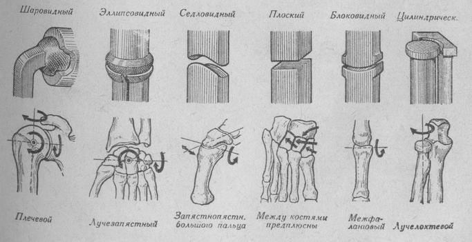 элипсовидный сустав